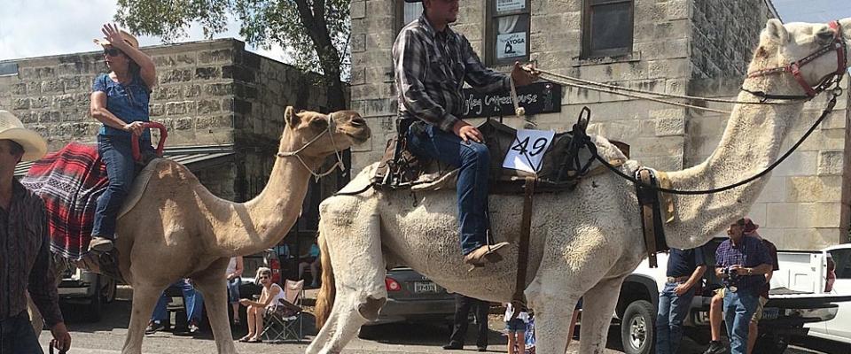 bandera_camels2