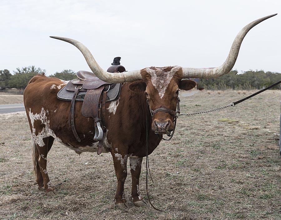 Bandera, TX